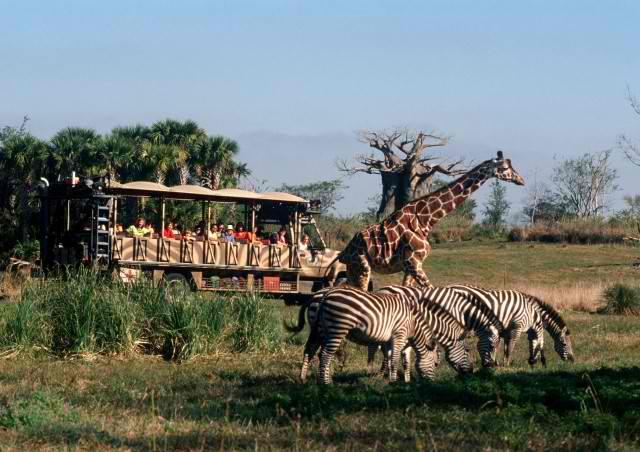 Disney's Animal Kingdom - Africa - Kilimanjaro Safaris